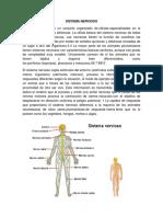 Sistema Nervios1