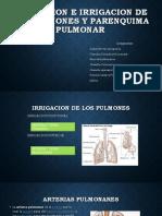 Inervacion e Irrigacion de Los Pulmones y Parenquima