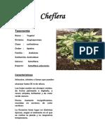 Herbario Botanica Anthony