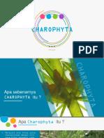 6. CHARROPHYTA