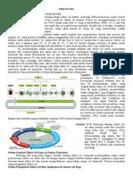 Print 7 Siklus Sell Dan Program Kematian Sel