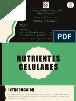 Nutrientes Celulares Completo