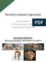 daunatorii_plantelor_legumicole