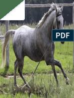 caballo gris.pdf