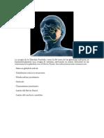 La Cirugía de La Glándula Parótida