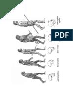 Evolucion Humana Imagenes
