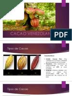 Presentacion Cacao 1