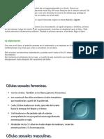 Celulas Sexuales y Fecundación