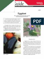 Eggplant Morfology