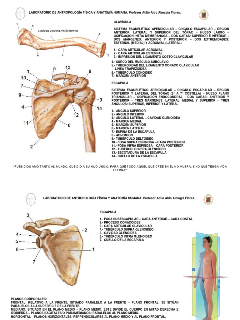 Osteo Mmss