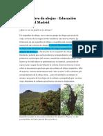 El Enjambre de Abejas - Educación Ambiental Madrid