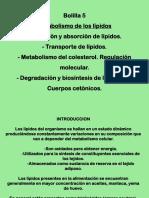 Clase Metabolismo de Lípidos I - Gonzales Loayza