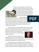 Crecimiento del embrión de un delfín