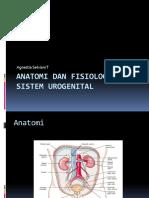 Anatomi Dan Fisiologi Sistem Urogenital. FIXpptx