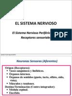 Clase 2 SN periferico receptores.pdf