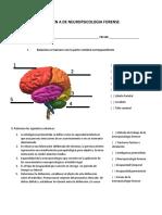Examen a de Neuropsicologia Forense