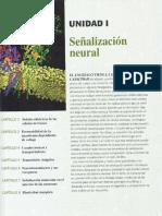 Señalizacion neuronal