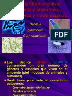6.bacilos gram + 1