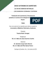 Ts Evaluación de La Presencia y Frecuencia de Parasitos en Caninos de La Delagación Felipe Carrillo Puerto - Yesenia Rubio Venegas