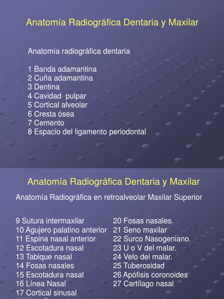 3 Anatomia Radiografica
