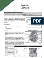 III Bimestre-ANATOMÍA-4TO-SECUNDARIA.doc
