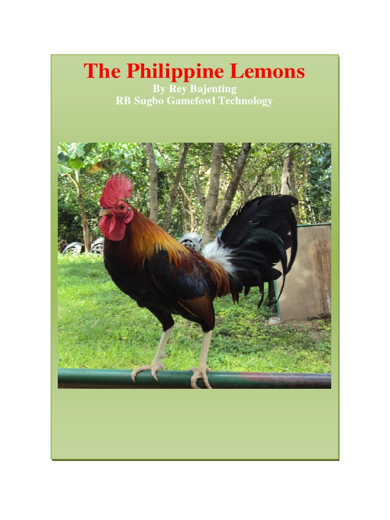 The Philippine Lemons: By Rey Bajenting RB Sugbo Gamefowl