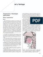 Anatomia Oral