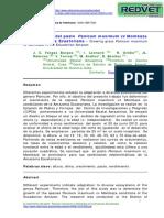 El Crecimiento Del Pasto Panicum Maximum Vc Mombaza AMAZONIA ECUAT