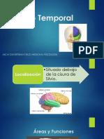 Lóbulo Temporal