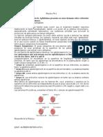 PracticasFracciona Sangre2016 (1)