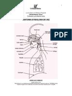 Anatomia e Fisiologia da voz.pdf