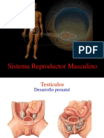 Clase 11 Sistema Reproductor