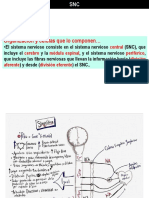 Sistema Nervioso Central Profesor Ontiveros