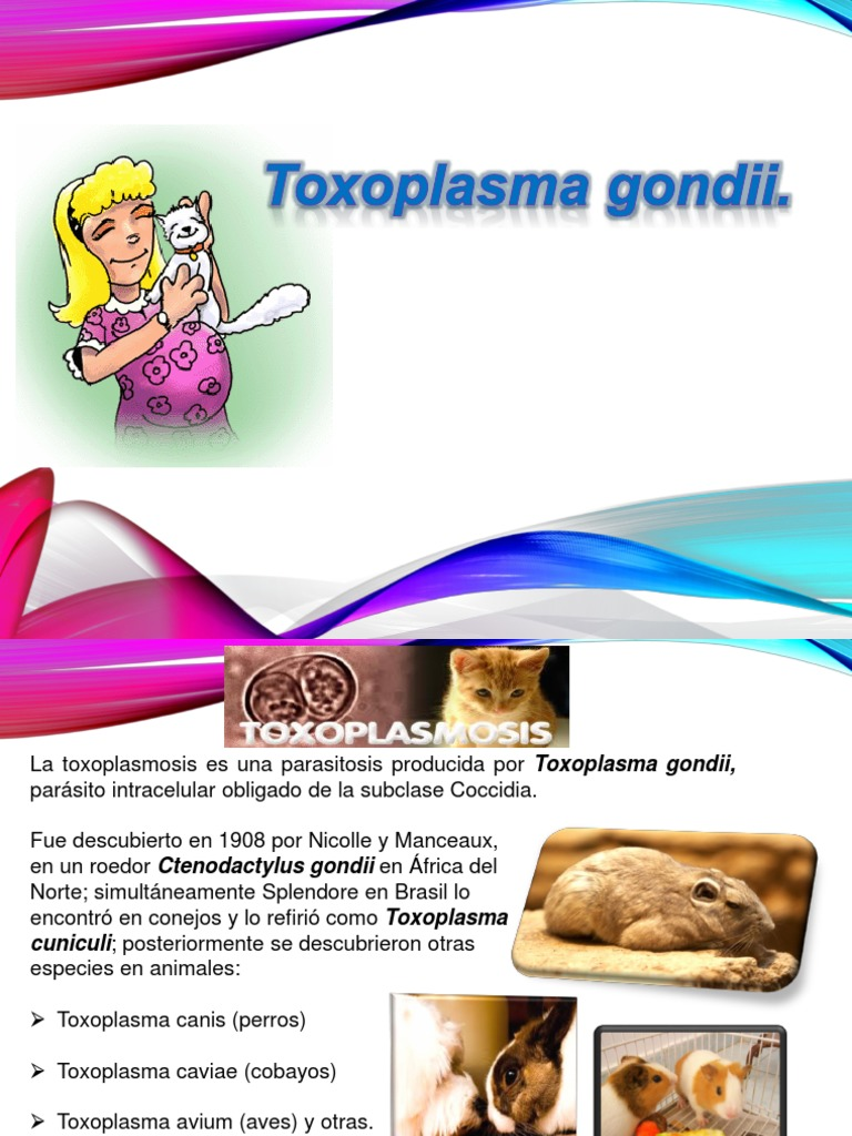 medidas de prevencion de toxoplasma gondii