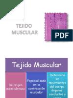 5 Muscular