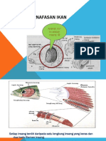 Struktur Pernafasan Ikan