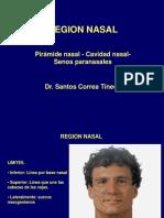 Region Nasal- Correa