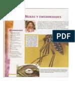 53711915-Ed-Salud-Noxas-Epidemis-Endemia-y-Pandemia.pdf