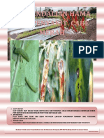 Pengendalian Hama Dan Penyakit Cabe Merah