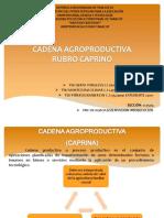 CADENA AGROPRODUCTIVA CAPRINA1.pptx