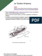 Flexor Tendon Anatomy