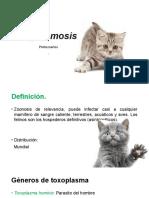 Toxoplasmosis Editado