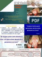 Morfologia Del Cerebro Dr Jaac