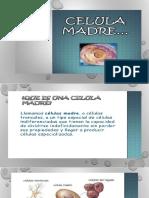 Celula Madre (12)