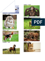Animales en Kiche