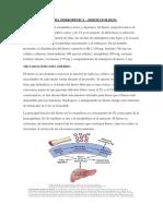 Anemia Ferropénica - Fisiopatología