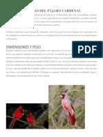 Características Del Pájaro Cardenal