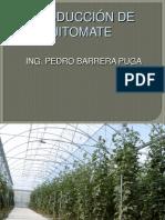 PRODUCCIÓN  DE JITOMATE 1