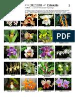 Orquídeas nativas de Colombia