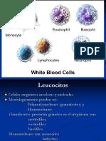 5 leucocitos.ppt